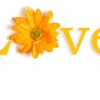 Thumbnail image for Love is a Choice